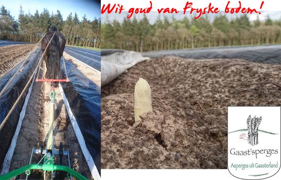 wit goud van friese bodem